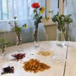 dried Dahlia petals